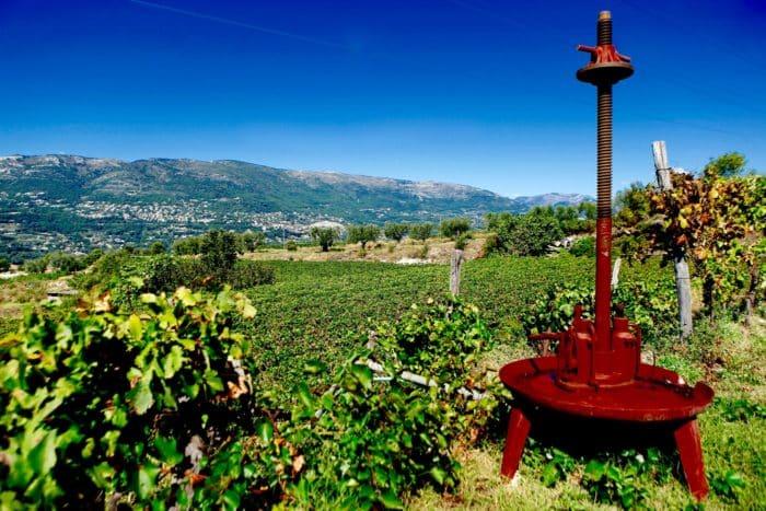 half-day wine tour