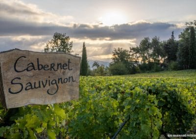 vines - cabernet sauvignon- Frenche riviera wine tour s and tasting from Nice and Cannes - small group - half day wine tour