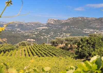 wine tasting- wine and vines - half day wine tour - small group tourfrom Nice