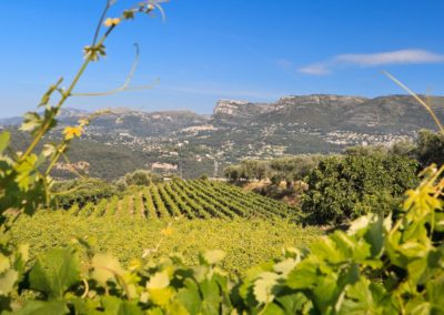 wine tours from Nice in Bellet Wine region - French Riviera Wine Tours