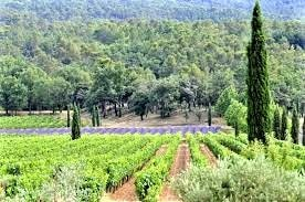 wine tours from Nice - Cannes - Wine tasting - French Riviera Wine Tours