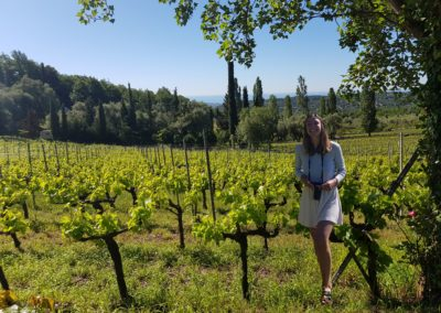 discovering the vines during a wine tasting
